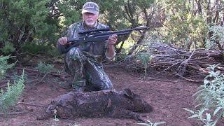 Airgun Hunt: Compatto Hog Hunt