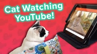 Cat YouTube & Easter Squirrels! // Funny Animal Compilation
