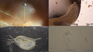 The Amazing Microscopic World