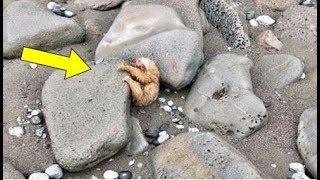 رأى زوجان هذا الحيوان الصغير بين الصخور وسمعوا صوت عند اقترابهم ، ماذا وجدوا