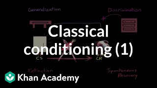 Classical conditioning: Extinction, spontaneous recovery, generalization, discrimination
