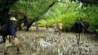 Sundarban - World's Largest Mangrove forest