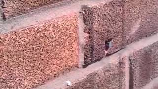 Bionic Bee Pulls Nail Out Of A Wall!