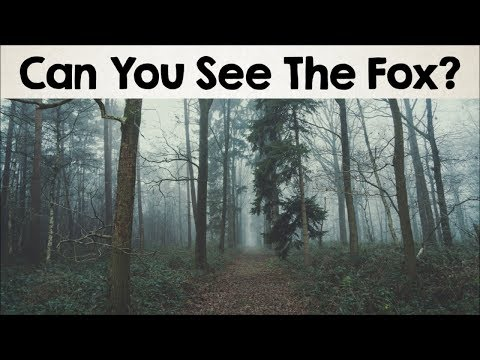 Nobody Can See All The Hidden Animals ред Optical Illusions ред Brain Teasers [#2]