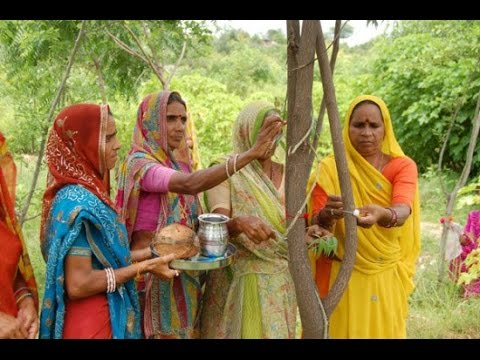 Indian Village Plants 111 Trees Every Time a Girl Child is Born