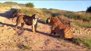 Documentaire Animalier  Nat Geo Wild - Animal Fight Club. francais