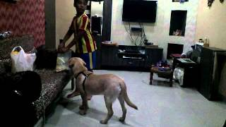 How to train your dog in Hindi