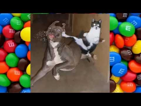 Super Ninja Cats Amazing  Compilation 2016