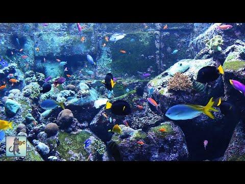 3 HOURS of Beautiful Coral Reef Fish Relaxing Ocean Fish Aquarium Fish Tank HD Relax Music