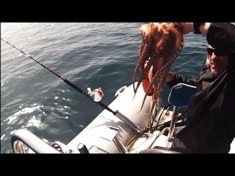 octopusJIGGING 10 grouper sotos fishing