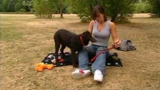 Celebrity Dog School - Michelle Ryan 1
