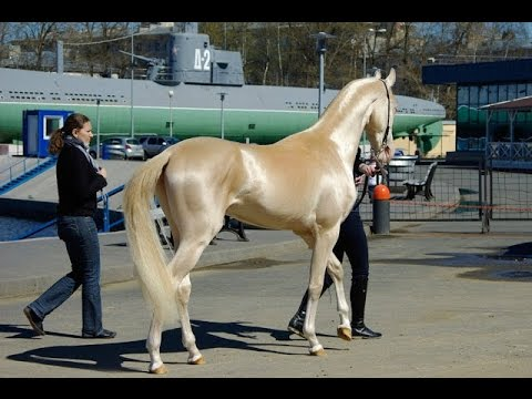 Top 10 Most Powerful Horses in the world 2015