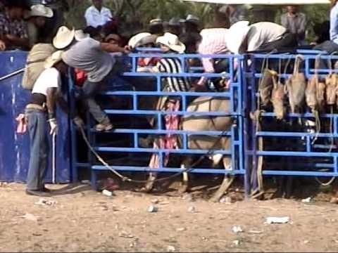 San Jose De Gallinas 5 10 14 bailes y jaripeos potocinos