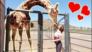 SURPRISING CATHERINE WITH A GIANT GIRAFFE!!! (THEY FELL IN LOVE)