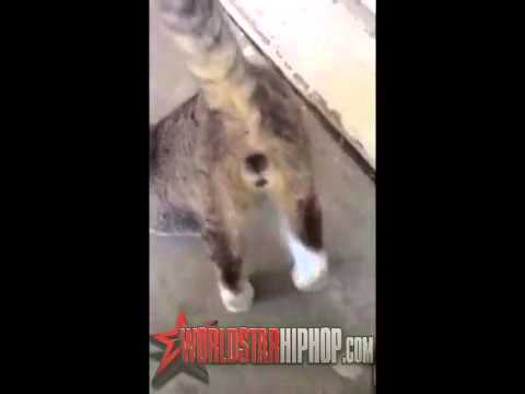 CATS GONE WILD Cat Gets Starts Twerking To Booty Shaking Music