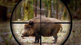 TOP 10 hits wild boar !