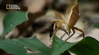 المحاكم البرية:جيش النمل