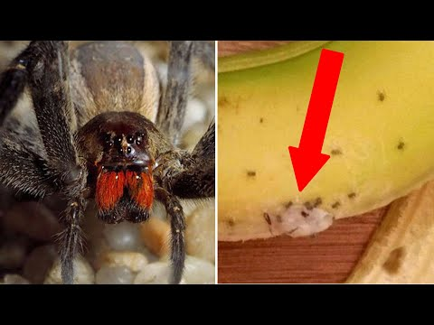 Spiders swarm out from bananas; A million cockroaches escape from farm in China - Compilation