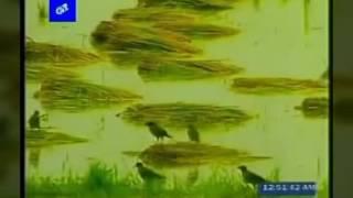 ek shagor rokter binimoy a banglar sadinota(singer: sumaya    desh ar gan