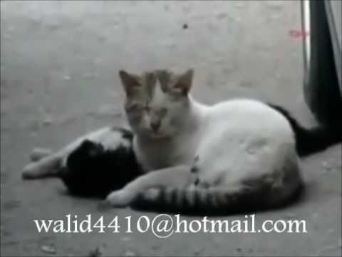 القطه التي ابكت الملايين Cat by millions Epcot