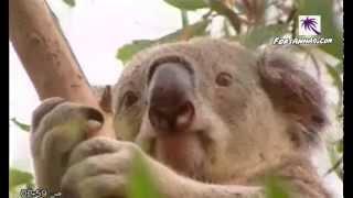 الفيلم الوثائقي : عالم أستراليا المجهول 01