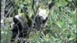 python vs monkey