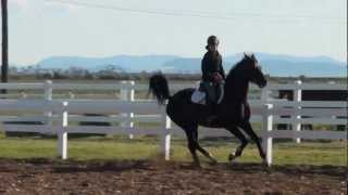 Ren 3ft 6 jumping lesson on his FEI hopeful horse Ray