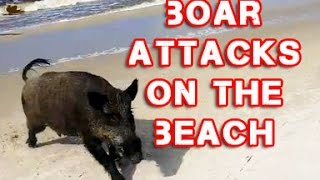 Wild Boar Attacks Tourists on the Beach