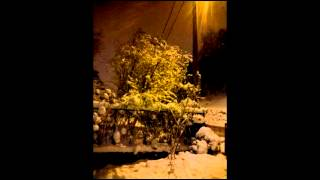 Zimska noć u mom dvorištu
