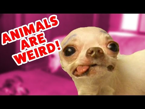 Top Weird Pets & Animals Compilation of 2016 Funny Pet Videos