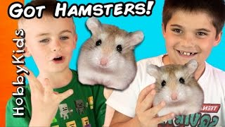 HobbyKids Buy REAL Hamsters! Escaped Pets at Home + Petco Toy Shopping Haul HobbyKidsTV