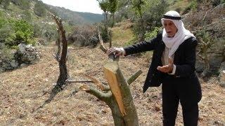 Wadi Abu Rish, Safa, at least 120 trees were damaged by Bat Aine's settlers