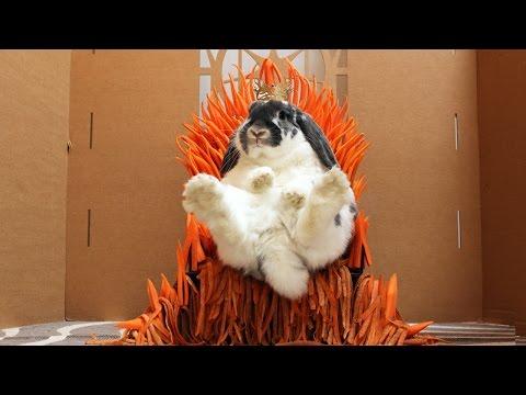 Xxx Mp4 Rabbit Eats A Castle Game Of Thrones 3gp Sex