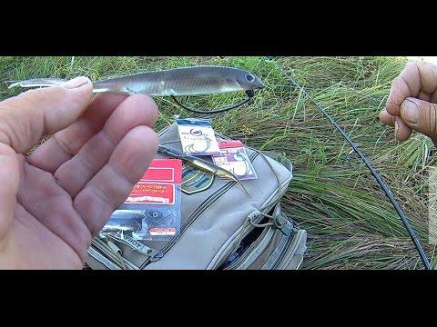ловля рыбы на ряску