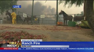 CBS2 Reporter Kristine Lazar Helps Save Horses From Fire