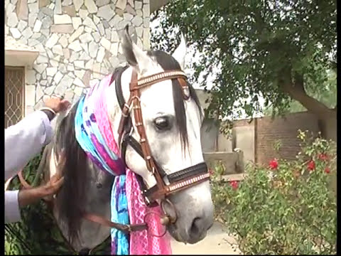 zuljana AUKAB 2 kantrili Jhelum 2