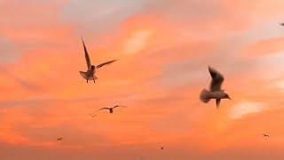 Ako pa ba ang Aamin - Eurika (Official Lyric Video)