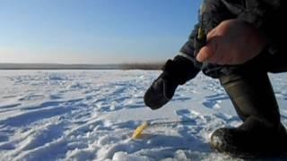 ловля рипуса на красноярском водохранилище
