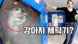 【충격】실제로 사용 중인 강아지 세탁기!? 여러분들의 생각은?