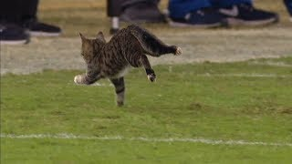 A Cat Enters The Field And Tony Romo Provides Hilarious Commentary! | Dolphins vs. Ravens | NFL