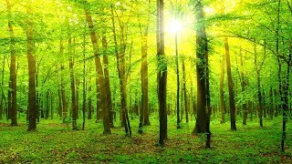 Healing Music, Relaxation Music, Chakra, Relaxing Music for Stress Relief, ☯3311