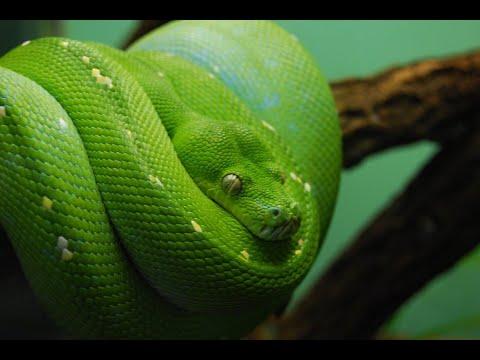 Xxx Mp4 10 Deadliest Snakes On Earth 3gp Sex