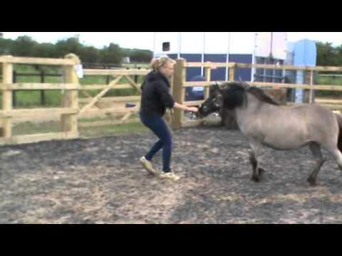 Horse limbo