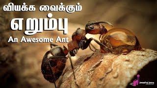 வியக்க வைக்கும் எறும்புᴴᴰ┇An Awesome Ant in the light of Quran┇Way to Paradise Class
