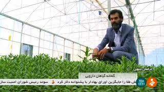 Iran Herbal plants greenhouse, Birjand county گلخانه گياهان دارويي شهرستان بيرجند ايران