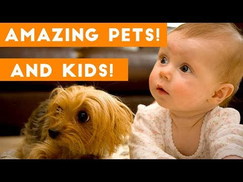 Most Amazing 1 Hour of Cute Kids And Pets 2018 Funny Pet Videos