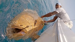 monster goliath groupers with nfl linebacker sam barrington  4k