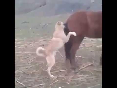 Xxx Mp4 Dog Fucking Horse 3gp Sex