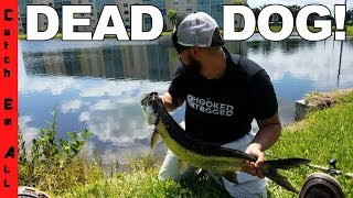 FOUND DEAD PET DOG while Fishing an ILLEGAL POND with Saltwater Fish! Before getting kicked out