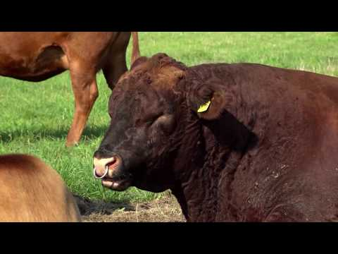 Rinderhaltung mal anders Tier.Haltung.Verstehen 5 8